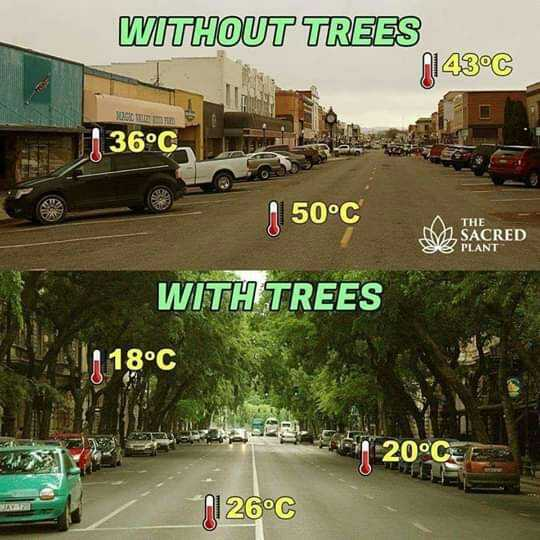🚜 कृषि दर्शन 🚜 - WITHOUT TREES N143°C 36°C 4150°C 50°C THE M1 SACRED SE PLANT XFRED WITH TREES 18°C 20°C 01 26°C - ShareChat