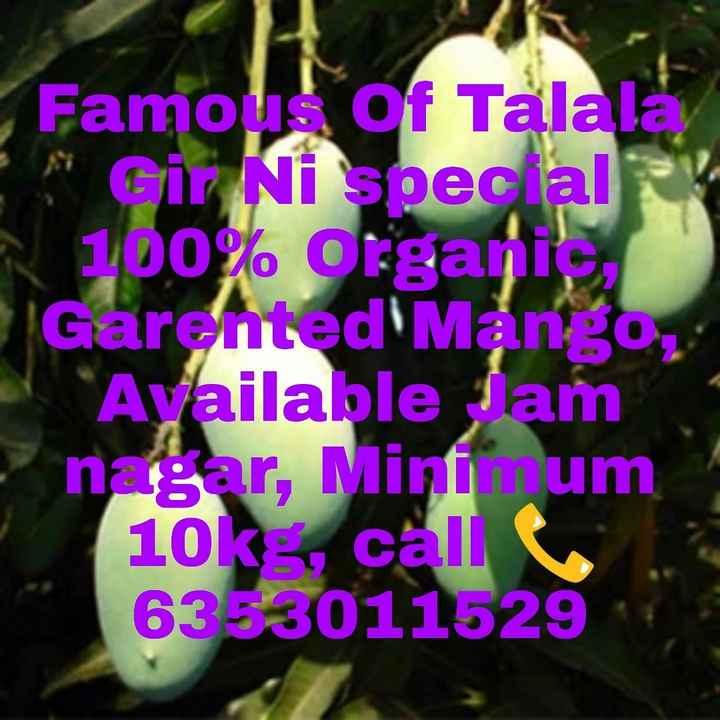 કેરી - Famous of Talala , Gir Ni special 100 % Organic , Garented Mango , Available Jam nagar , Mini um 10k calle 6353011529 - ShareChat