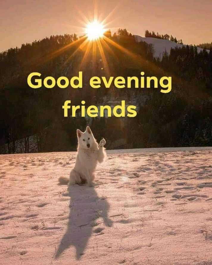 good evening good evening - Good evening friends - ShareChat